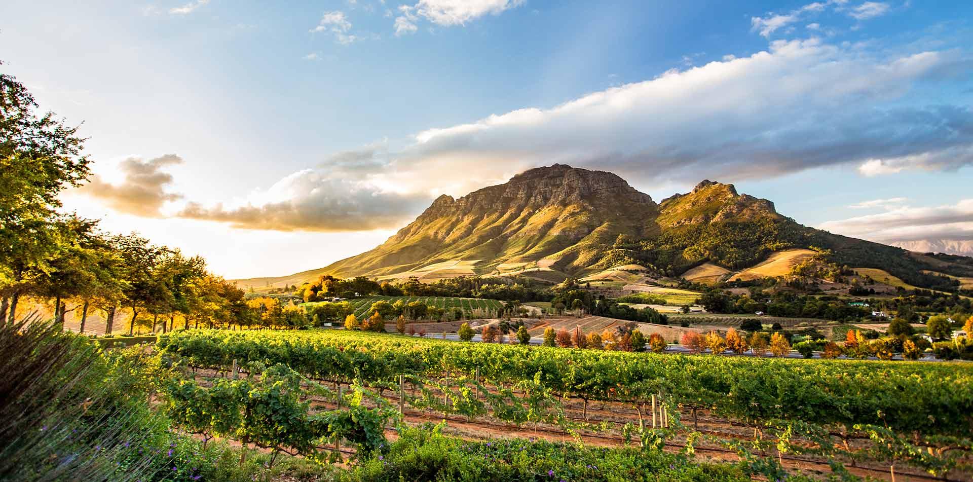 Wine Region at Sunset in Stellenbosch, South Africa