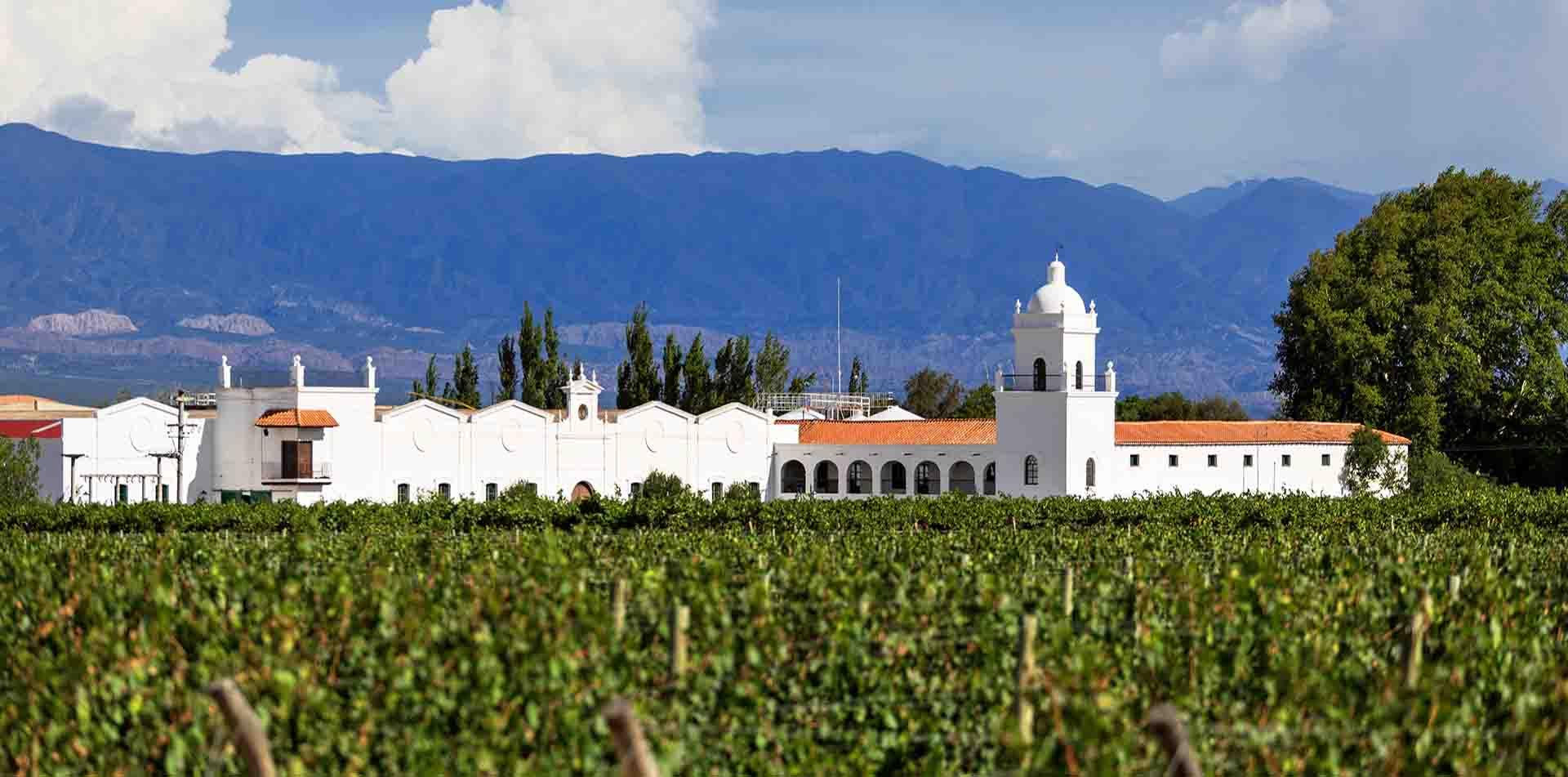 Vineyard in Argentina Wine District