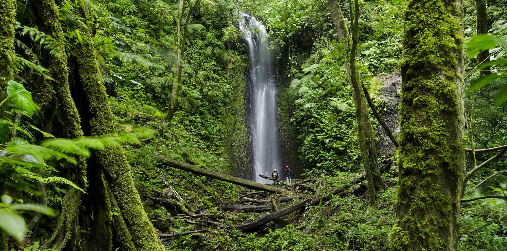 Waterfall in La Amistad, Panama