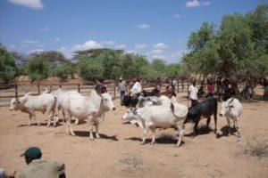 merille livestock market