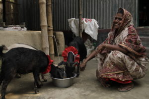 Jahanara with her two goats before the flood