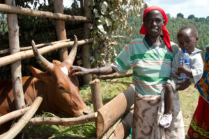 Some people received cows for both food and incomes.