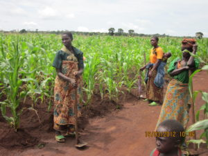 Mother leaders in the communal maize fields