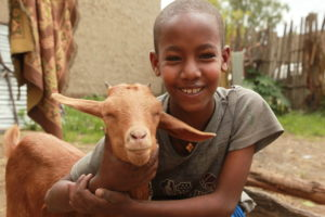 Goats provide a valuable source of nutrition and income in FH programs.