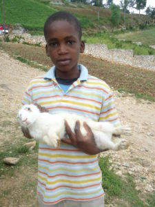 Rabbit distribution is one of the ways FH Is helping Haitians during their current food crisis.