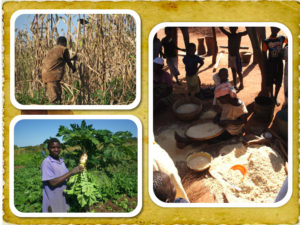 Agricultural projects in Mozambique