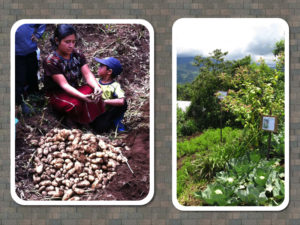 Agriculture Projects in Guatemala