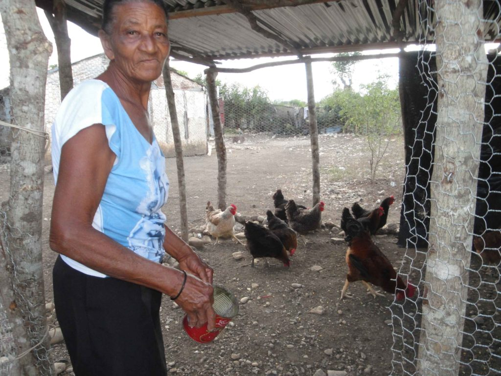 Mrs. Maria Mejia, who is 72 years old, can now earn a livelihood, after FH helped her raise chickens!