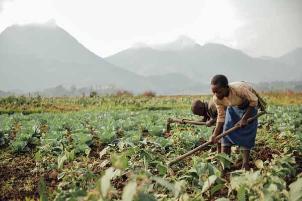 Amazing program yields fertile soil and saves lives food for Fertile soil 07