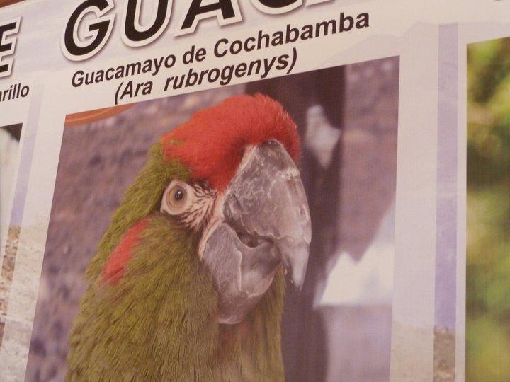 paraba poster