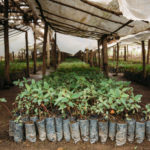 give food tree seedlings for easter