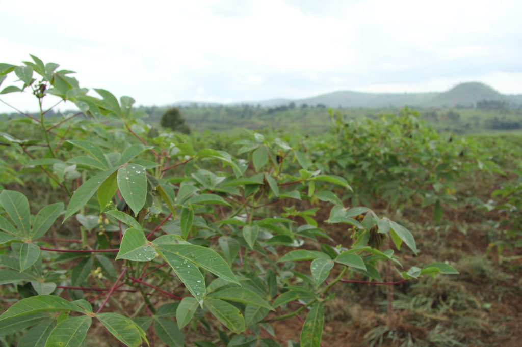 Divine farming produces more than improved crop yields