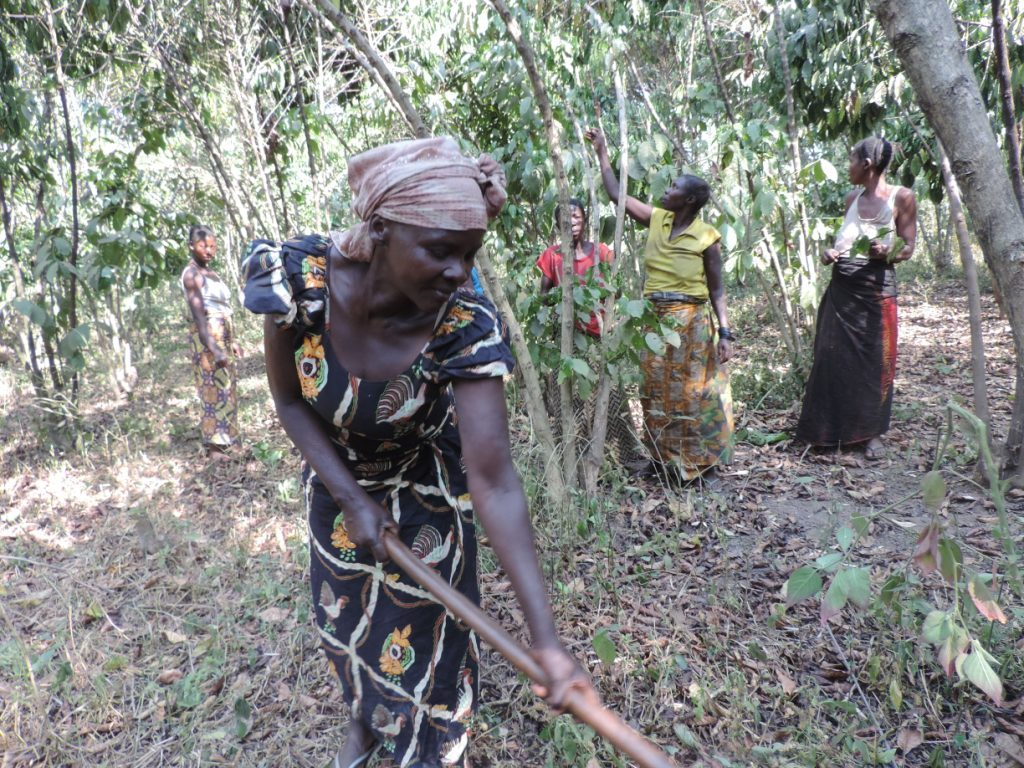 Woman in traditional clothing working in her field of coffee in the DRC
