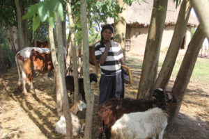 FH Ethiopia income generation participant with livestock