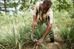 Man planting vetiver grass in Haiti