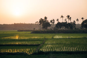 Bangladesh Landscape