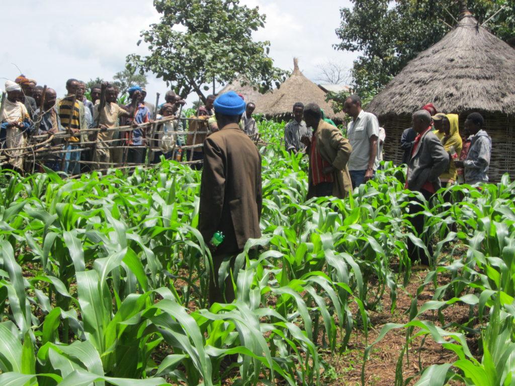 Abdela and his community members walk through his farm.