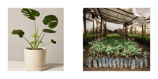 Amateur botanist gift ideas for her