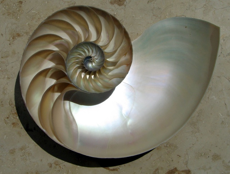 The nautilus approach