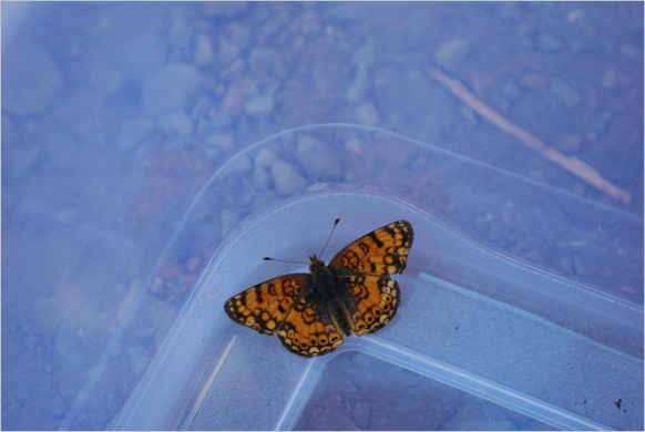 This was a nice little butterfly... I mean moth ... that we captured and then let go.