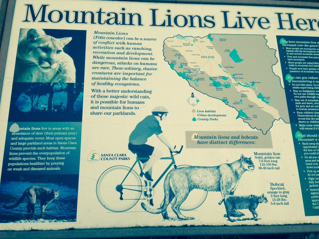 Don't you love the way this mountain biker is positioned right beside a mountain lion and bobcat? I want a sign like this hanging in my house. Cool by mere juxtaposition.
