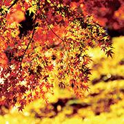 日本の色・四季の色
