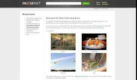Bounding Boxes - ImageNet