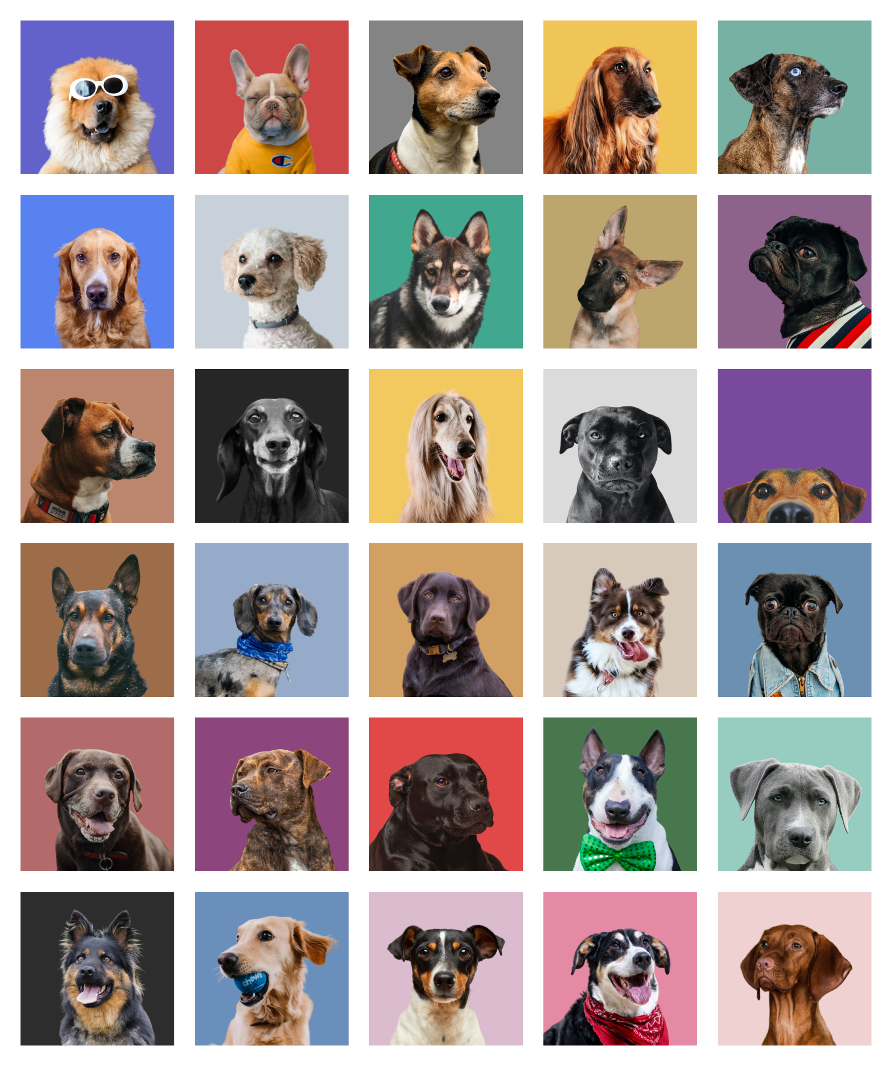 Free Avatars, lol - 60+ Adorable dog, cat and random animal avatars for your designs. Available for sketch, figma and PNGs.