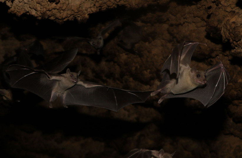Scientists discover 6 new types of coronavirus in bats