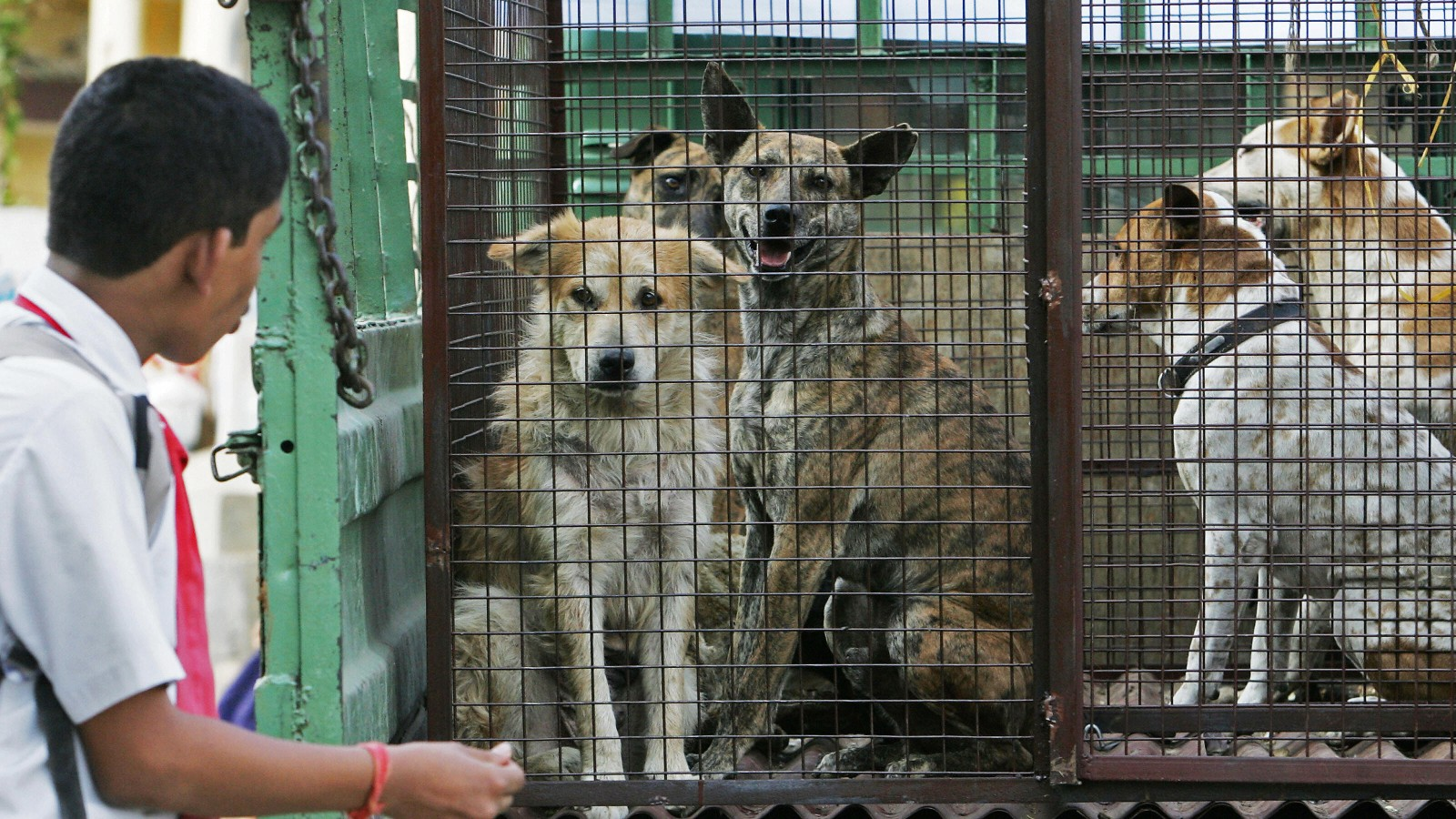 Stray dogs and coronavirus: Just a hypothetical theory with no proof