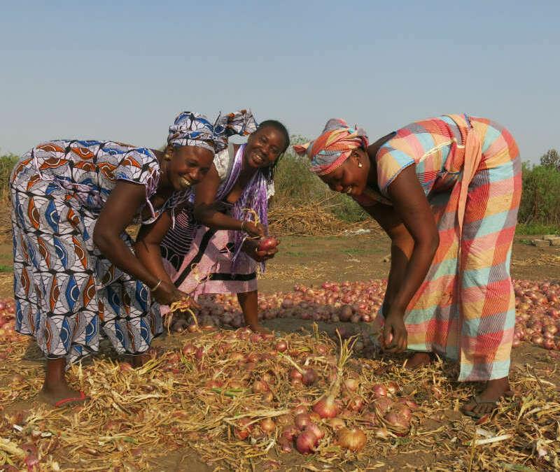 GIE Jigueenu Natangue School and Women's Garden Water Project – Senegal