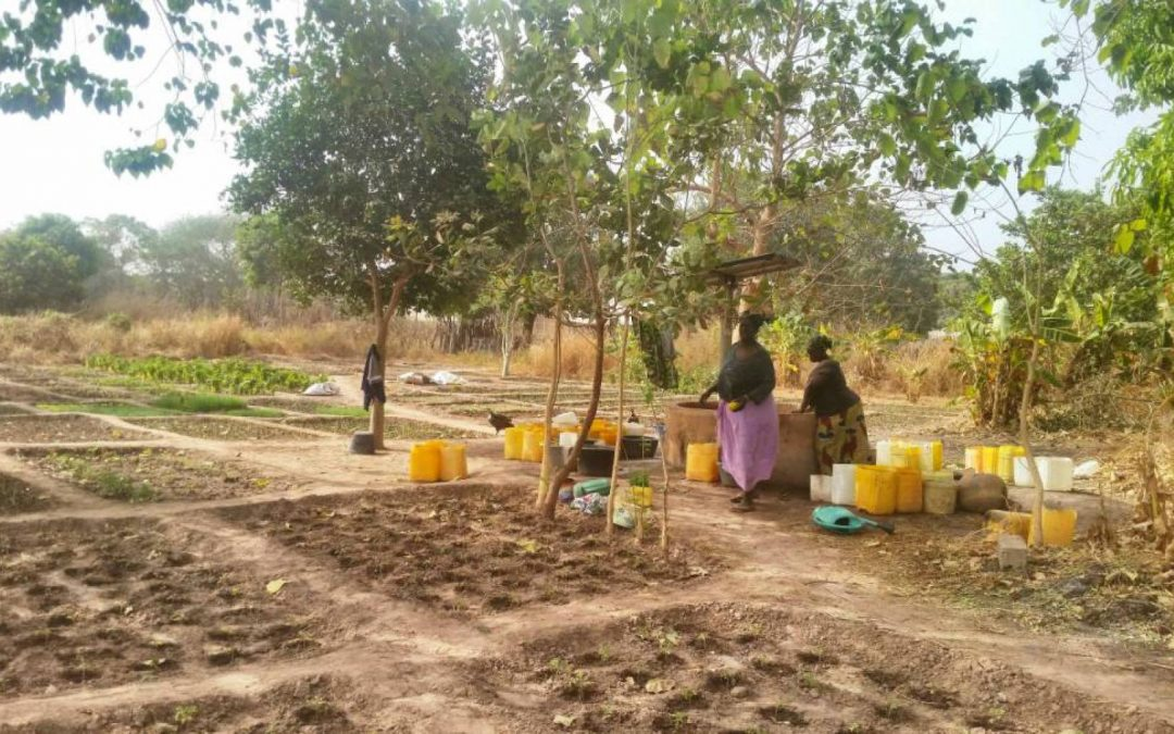 Women's Garden Borehole Project – The Gambia