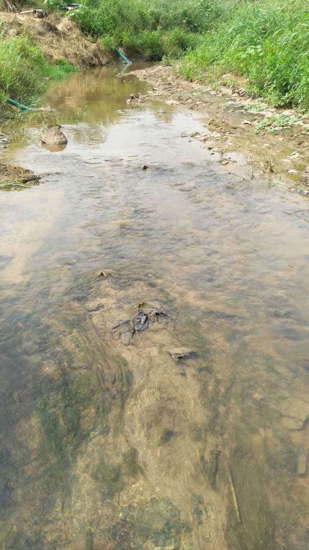 Riverside Apapoma