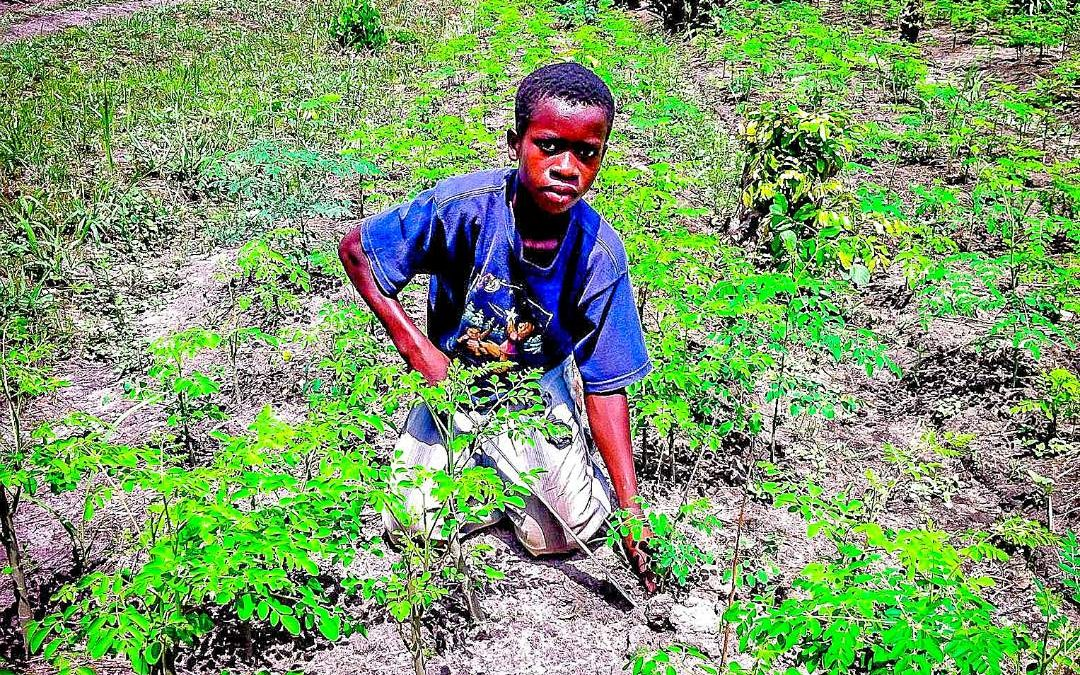 Call to Nature Permaculture Project – Ghana
