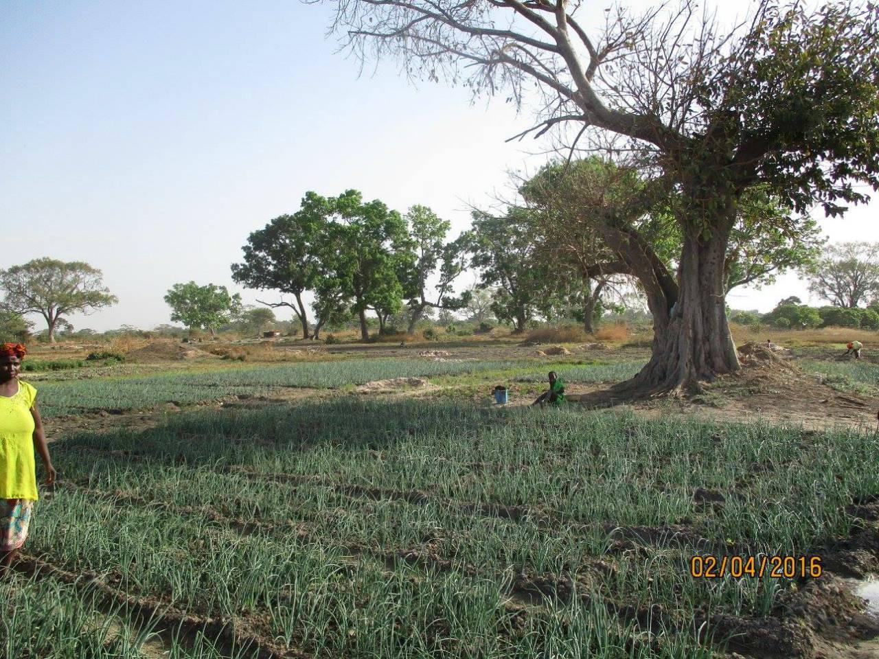 Dayxxx Well Project - Senegal