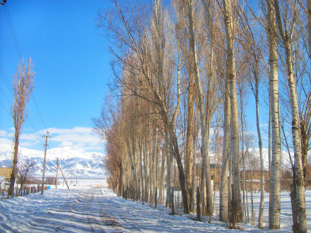 Dolon, Kygyzstan