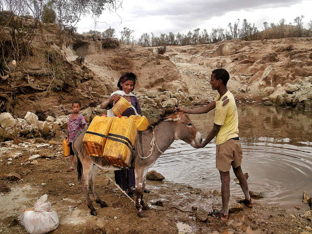 Gathering water with donkey