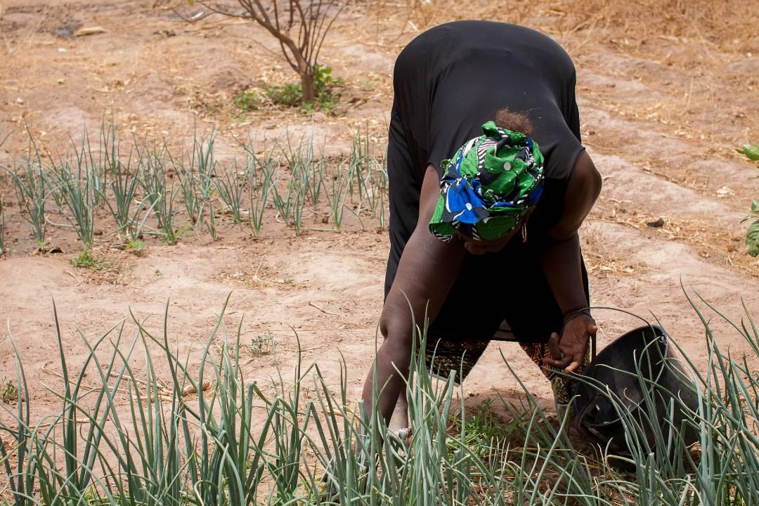 Mouye Women's Group Gardening Onions