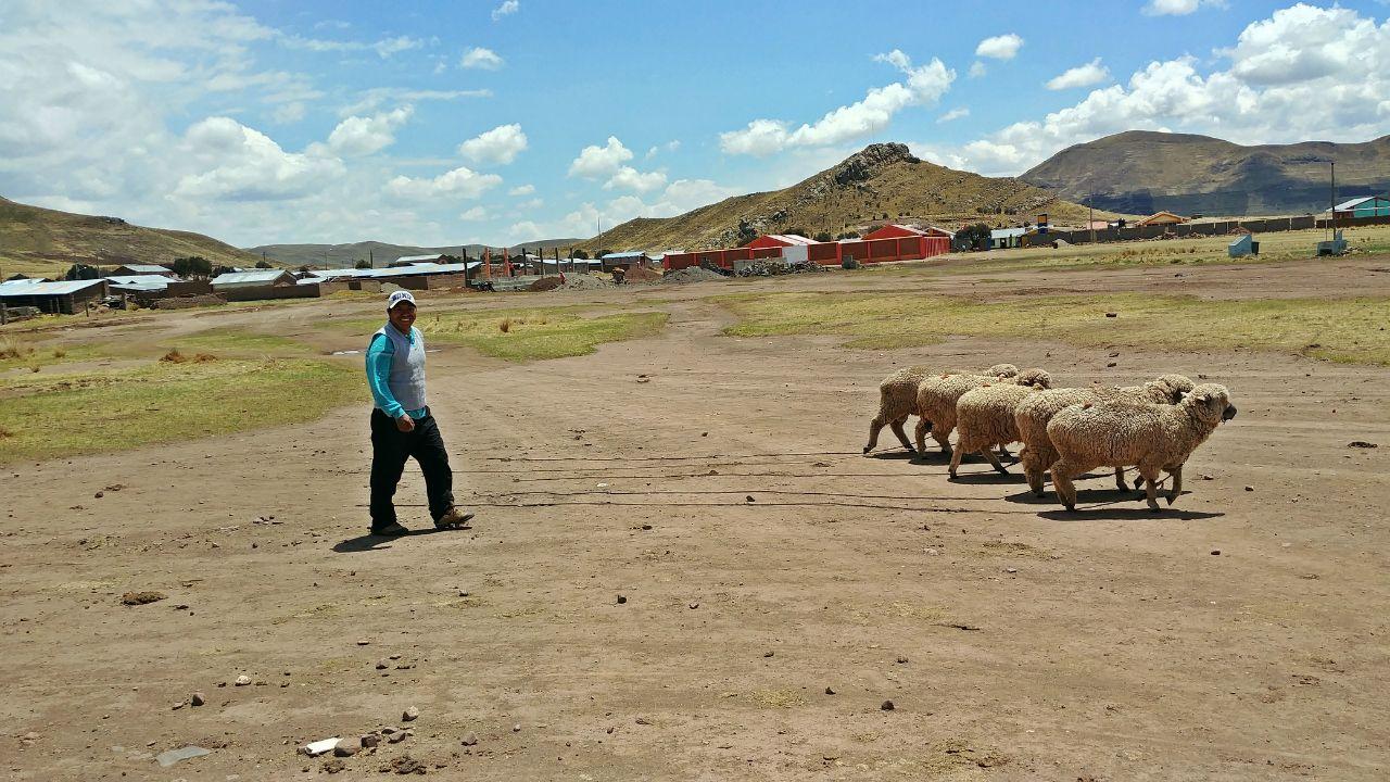 Altiplano Water Program - Peru