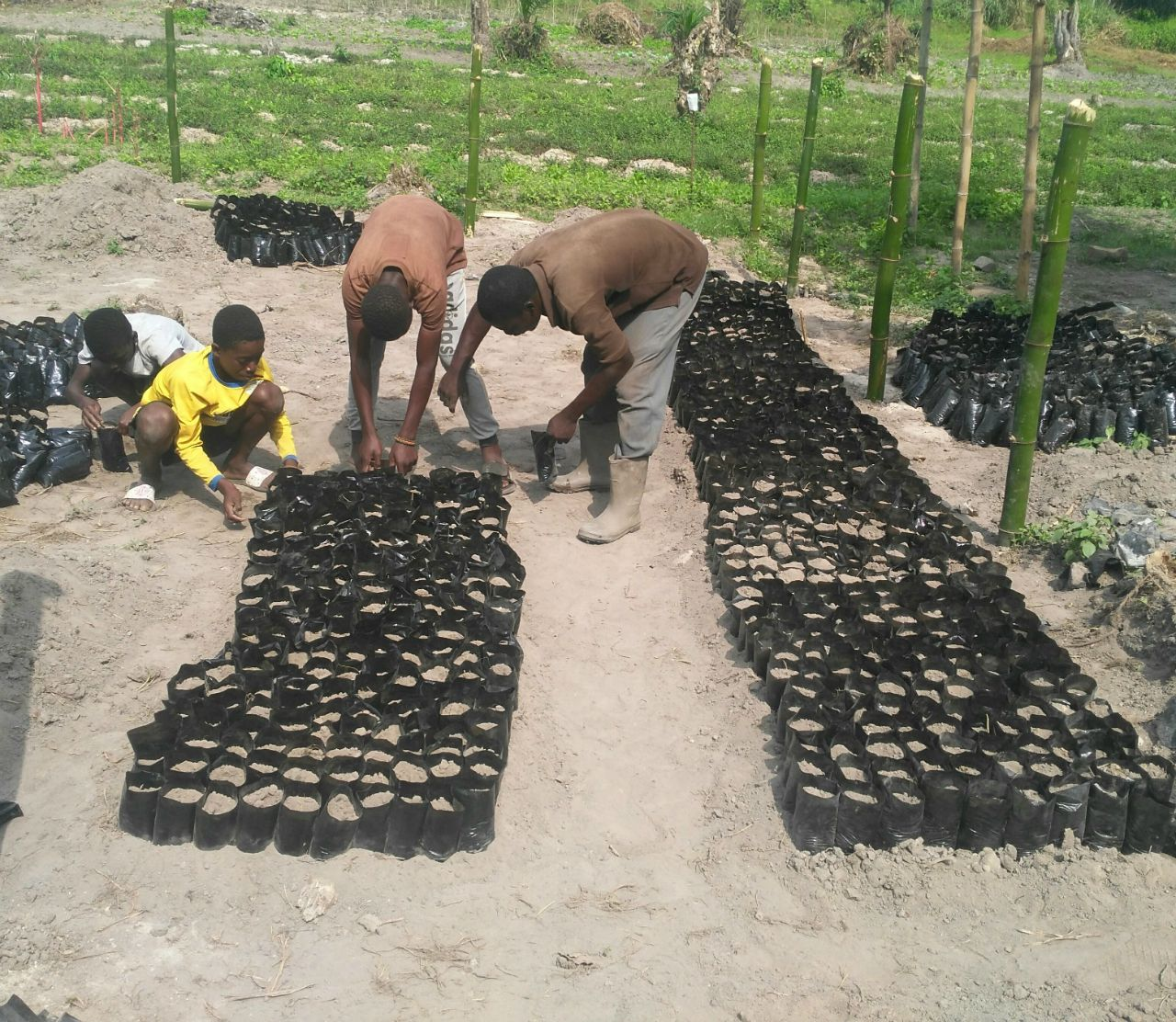 Call To Nature Permaculture Tree Planting Project III - Ghana
