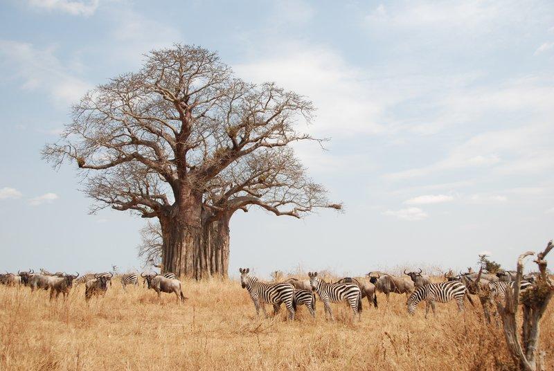 Simanjiro, Tanzania