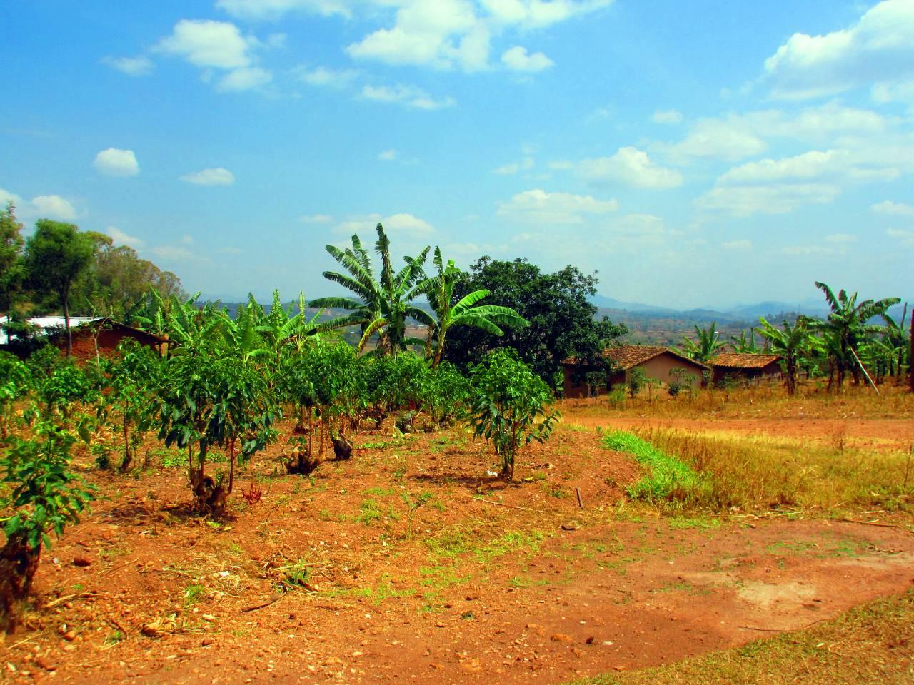 Mara Cell Water System Project - Rwanda