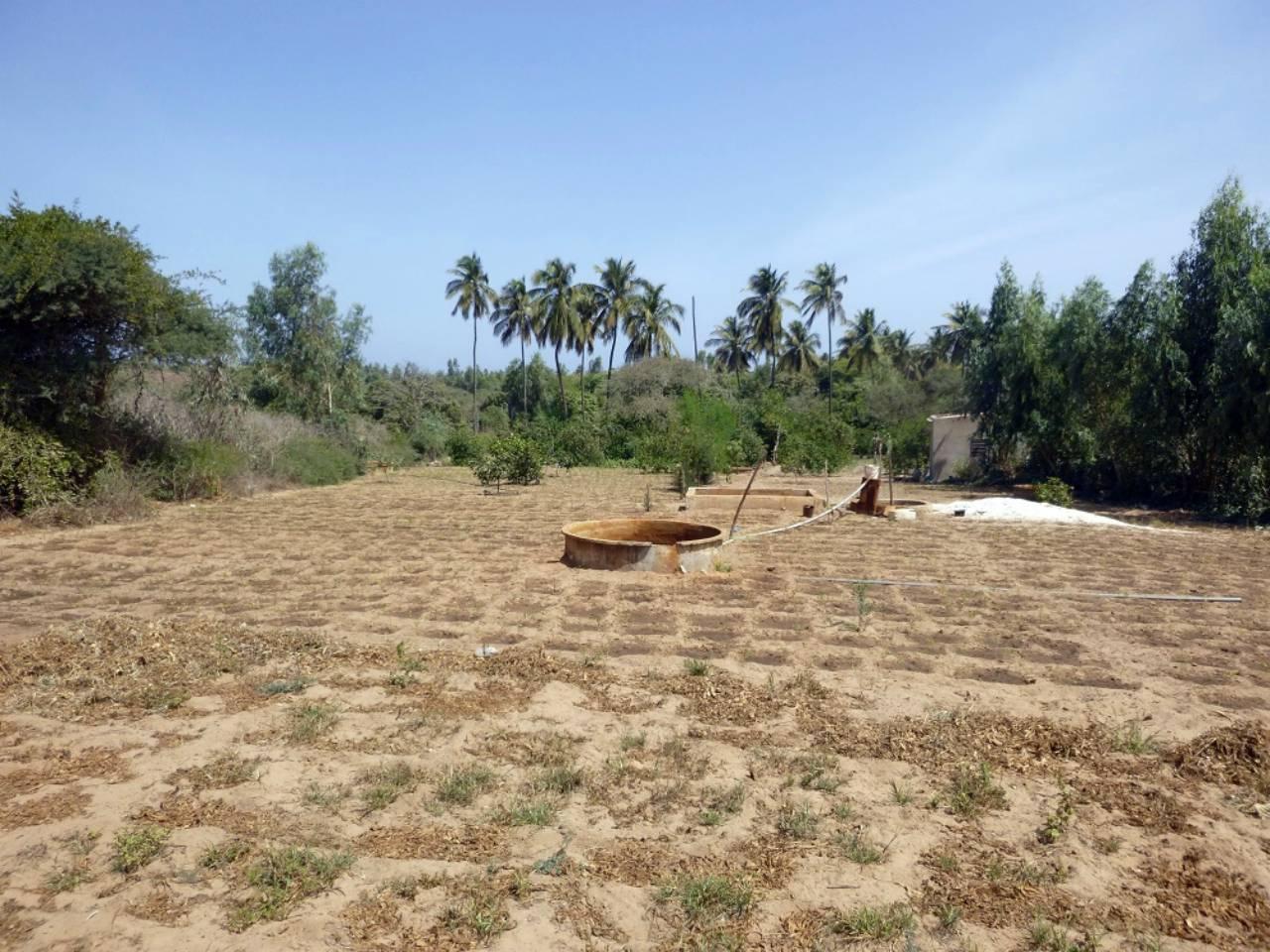 Mboro Master Farm Water Project - Senegal