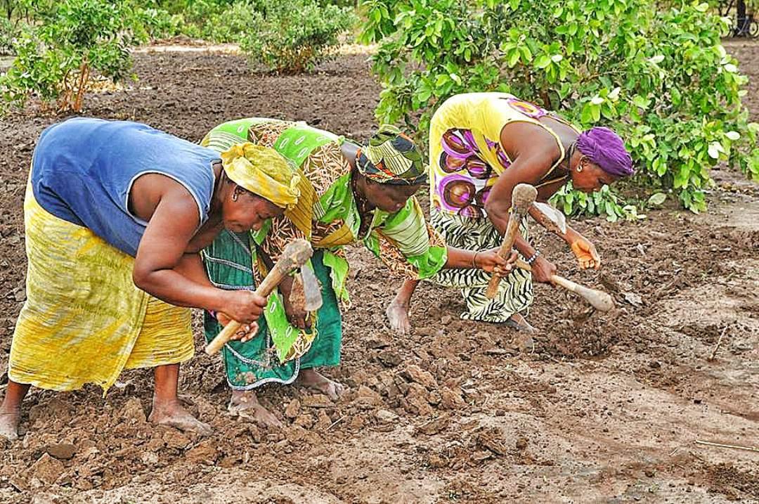 Senegalese women gardening